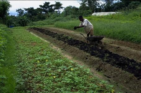 agriculture-agricultureperiurbaine-afd